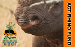 Support the ACT Rhino Fund